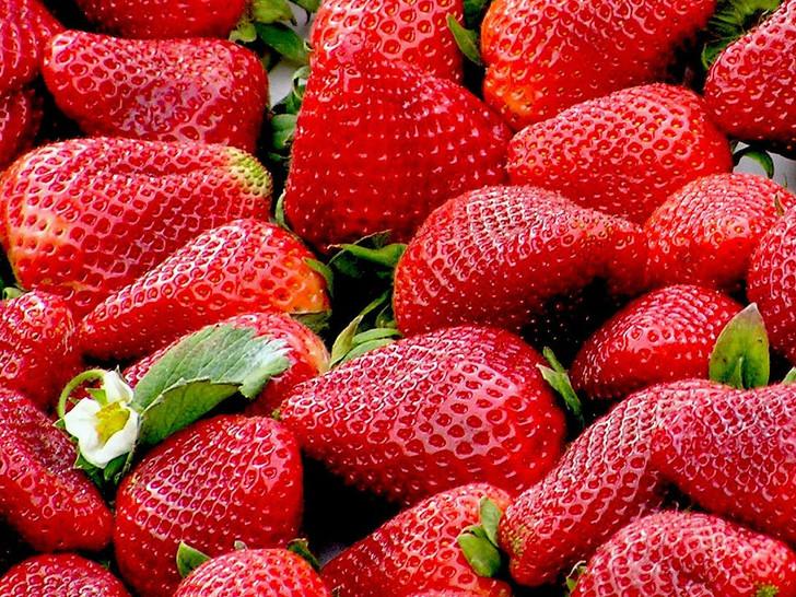 Strawberry, Cabot Fragaria x ananassa 'Cabot'