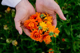 Calendula!  The Power of the Flower