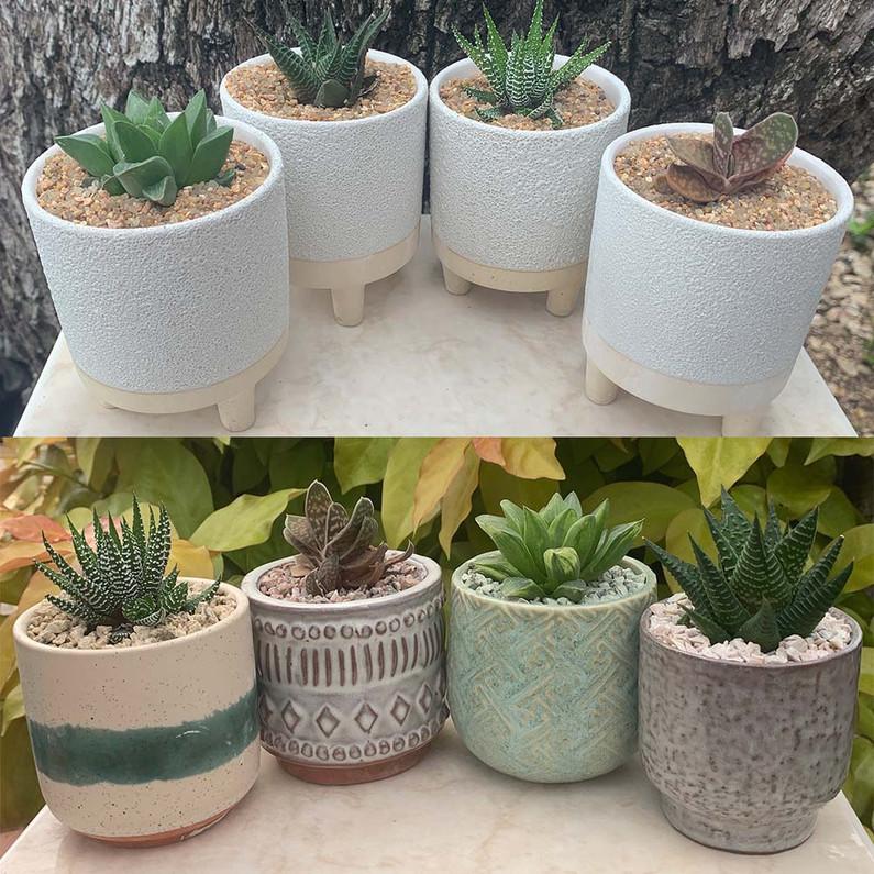 Haworthia Arrangements: How to Style your Plants 2 Ways