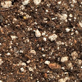 Succulent Gold cactus & succulent soil