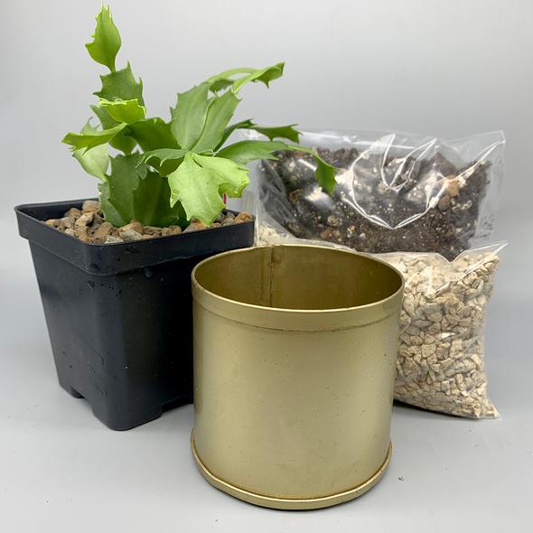 Christmas Cactus DIY Kit