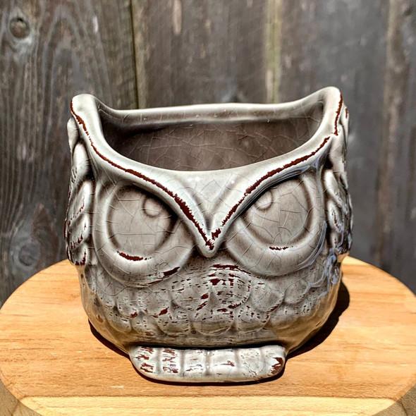 Aloof Owl Mini Planter