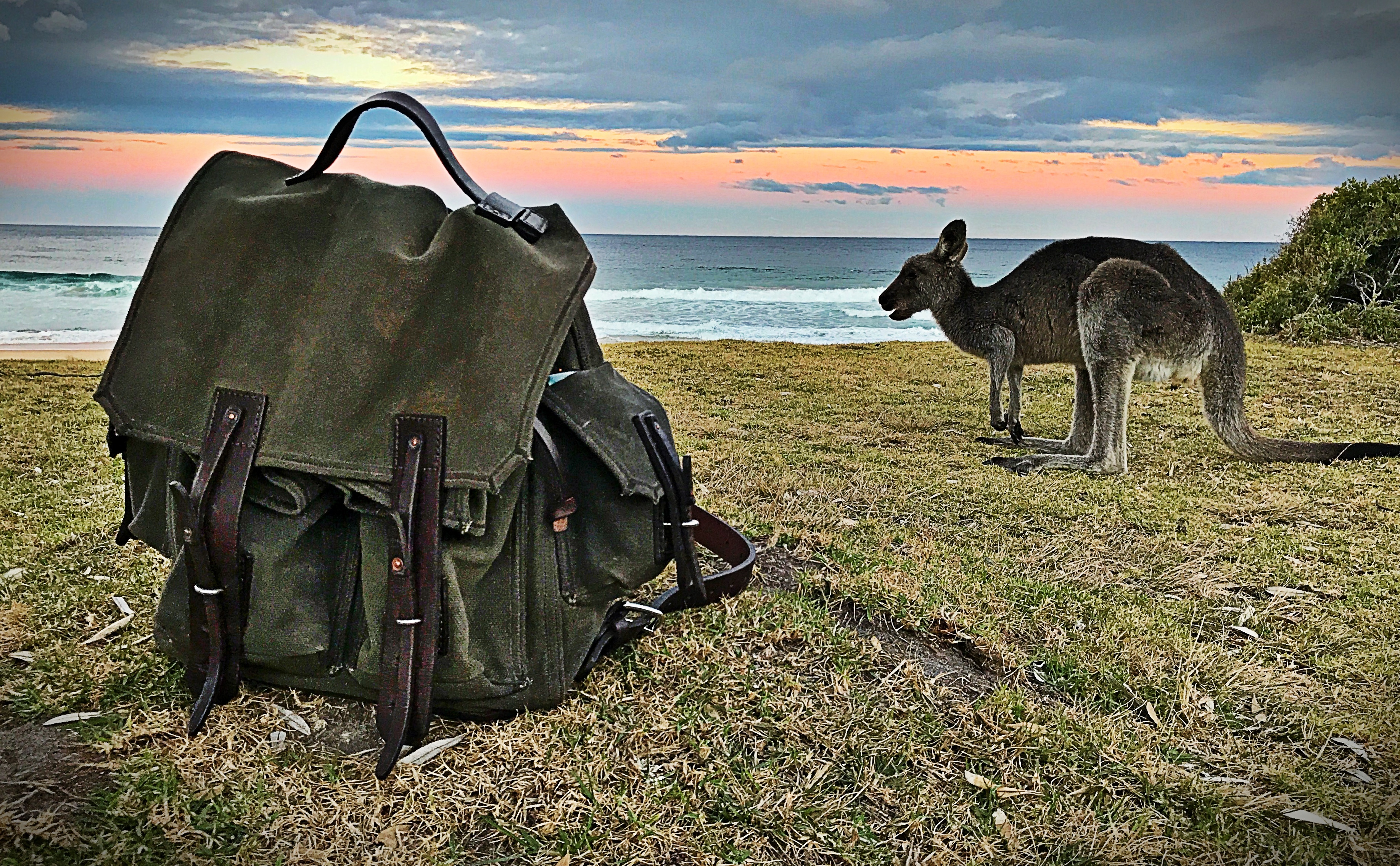 canvas backpack in Australia with a kangaroo