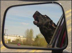 dog-blue-saddleback-leather-rearview-mirror.jpg