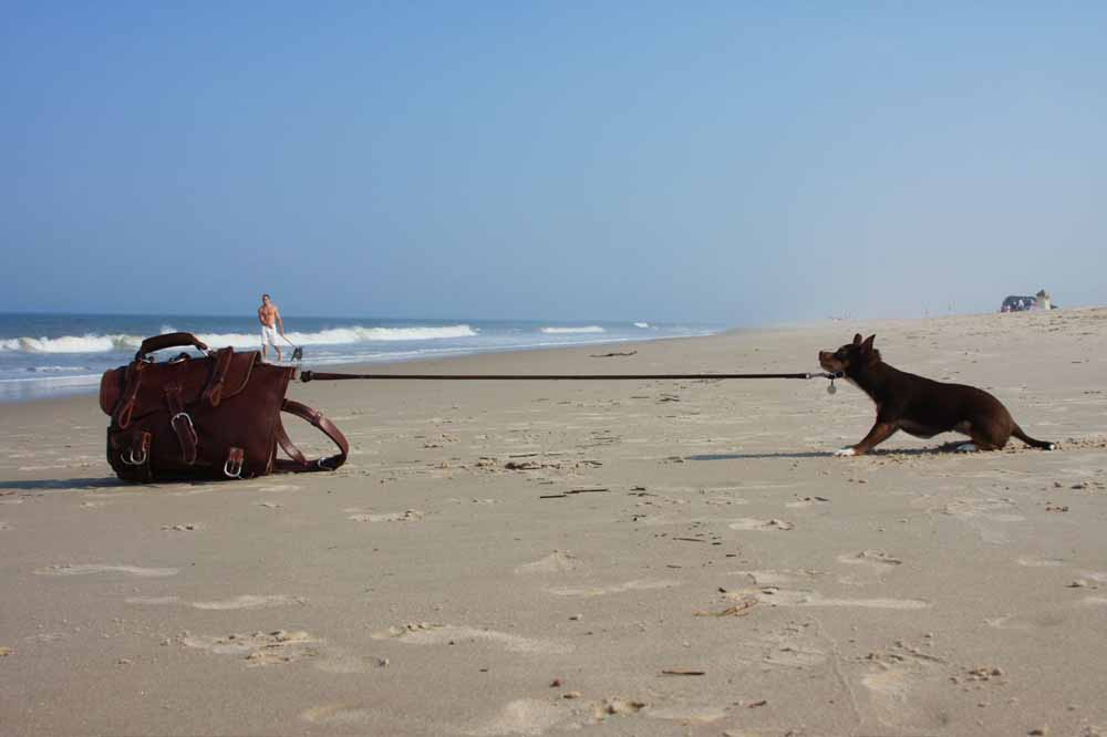 satchel at beach anchoring dog