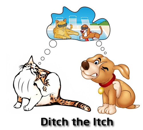 Ditch the Itch has been formulated by using herbs that help to reduce the body producing histamine. By using histamine blocking herbs it helps the body to calm and reduce down the external reaction of redness, itching and or scratching.