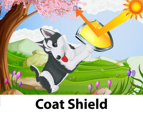 Coat Shield is great for minimising burnt coat.  A quick spay on your pets coat before going out in the sun will help protect it from the harsh sun.​