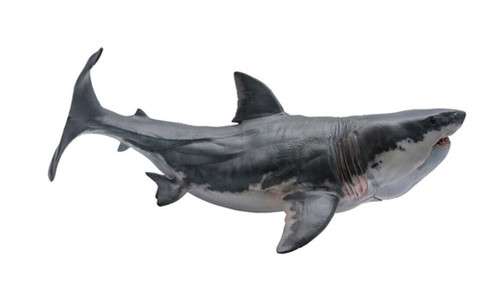 Megalodon by PNSO