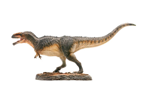 Giganotosaurus Model by PNSO