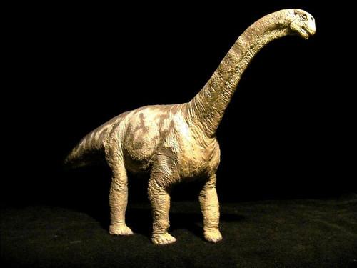 Camarasaurus by Carnegie