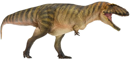 Carcharodontosaurus by PNSO