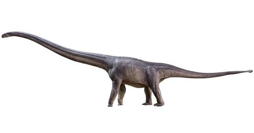 Mamenchisaurus by PNSO