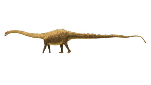 Diplodocus by Eofauna
