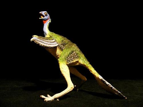 Caudipteryx by Carnegie