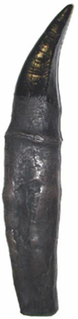Tyrannosaurus Rex Tooth