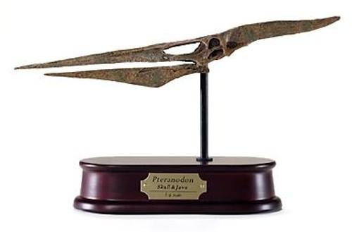 Pteranodon Skull Replica by DinoStoreus