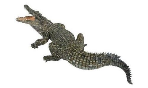 Nile Crocodile by Papo
