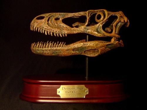 Deinonychus Skull Replica by DinoStoreus