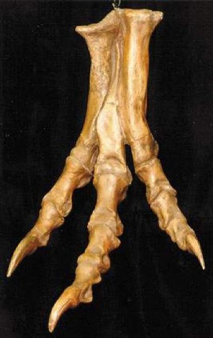 Tyrannosaurus Foot