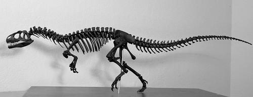Allosaurus Skeleton Resin Kit by Desert Dinosaurs