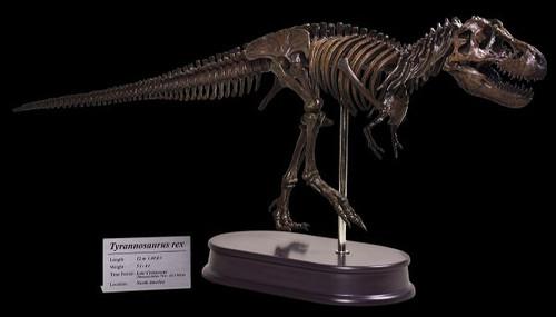 Tyrannosaurus Skeleton by Favorite