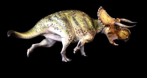 Nasutoceratops Finished Model by Dan's Dinosaurs