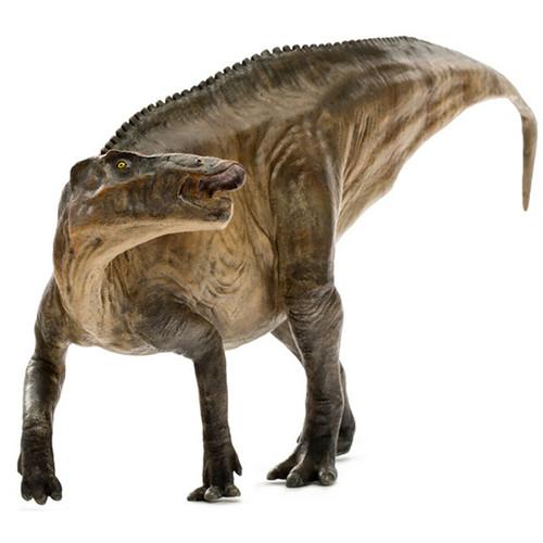 Shantungosaurus by PNSO