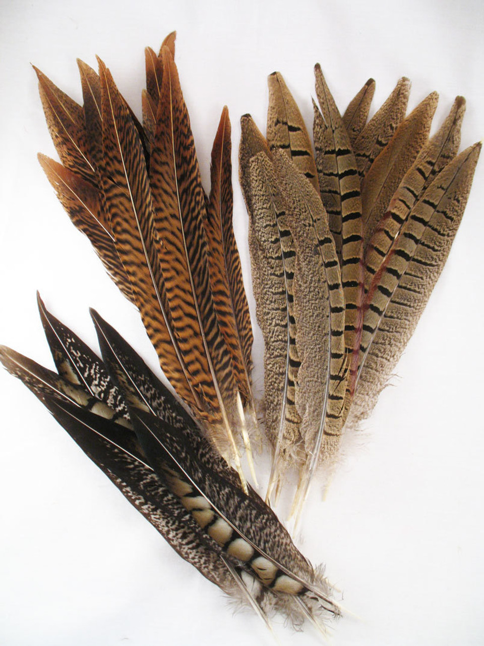"""10/"""" to 20/"""" Lime Green Silver Pheasant Tail Feather"""