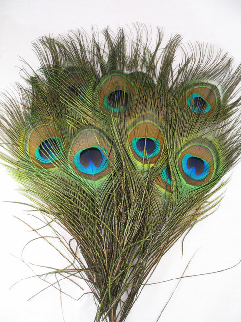 Show me a picture of peacock feathers