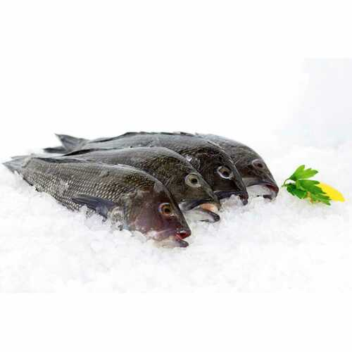 Virginia Beach Black Sea Bass 6 Lb. Avg (5-6 Fish)