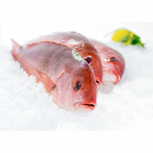 Whole Caribbean Red Snapper 3 Lb. Avg(1-2 Fish) Wholey's