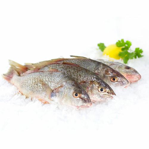 Virginia Sea Croaker 6 Lb. Avg (6-8 Fish)
