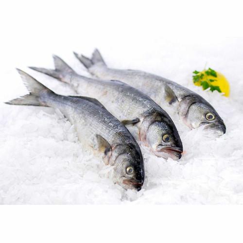 Jersey Blue Fish 6 Lb. Avg (3-6 Fish) Wholey's