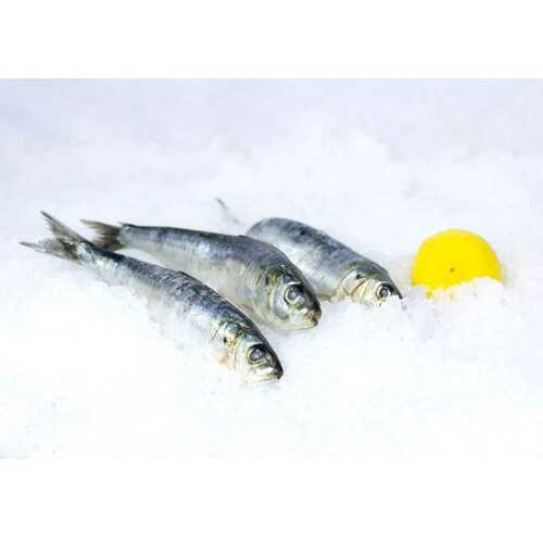 Sardines Frozen 8 Lb.