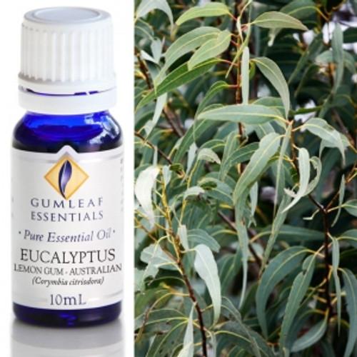 eucalyptus lemon gum essential oil