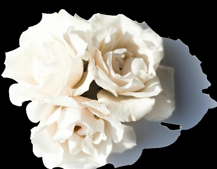 mor-flower-1.png
