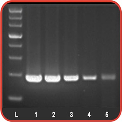 Accuris Hot Start Taq Polymerase PCR Reagents