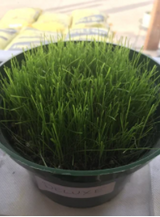 Deluxe Grass Seed Mix