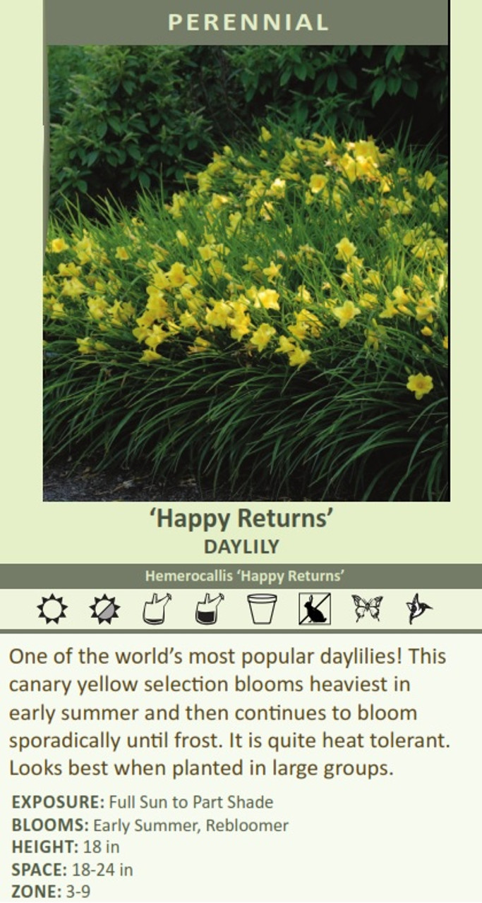 'Happy Returns' DAYLILY Hemerocallis 'Happy Returns' One of the worlds most popular daylilies! This canary yellow selection blooms heaviest in early summer and then continues to bloom sporadically until frost. It is quite heat tolerant. Looks best when planted in large groups. EXPOSURE: Full Sun to Part Shade BLOOMS: Early Summer, Rebloomer HEIGHT: 18 in SPACE: 18-24 in ZONE: 3-9