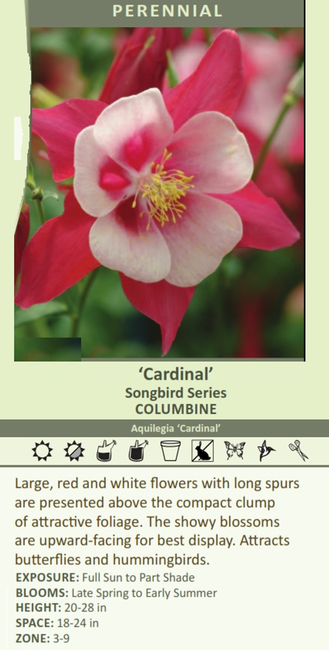 Cardinal' Songbird Series COLUMBINE Aquilegia 'Cardinal' Large, red and white flowers with long spurs are presented above the compact clump of attractive foliage. The showy blossoms are upward-facing for best display. Attracts butterflies and hummingbirds.  EXPOSURE: Full Sun to Part Shade BLOOMS: Late Spring to Early Summer HEIGHT: 20-28 in SPACE: 18-24 in ZONE: 3-9