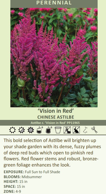 Vision in Red' CHINESE Astilbe Astilbe c. 'Vision in Red' PP133.7265 This bold selection of Astilbe will brighten up your shade garden with its dense, fuzzy plumes of deep red buds which open to pinkish red flowers. Red flower stems and robust, bronze-green foliage enhances the look. EXPOSURE: Full Sun to Full Shade BLOOMS: Midsummer HEIGHT: 15 in SPACE: 15 in ZONE: 4-9