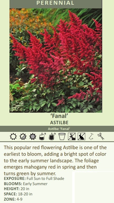 Fanal' Astilbe Astilbe 'Fanal' This popular red flowering Astilbe is one of the earliest to bloom, adding a bright spot of color to the early summer landscape. The foliage emerges mahogany red in spring and then turns green by summer.  EXPOSURE: Full Sun to Full Shade BLOOMS: Early Summer HEIGHT: 20 in SPACE: 18-20 in ZONE: 4-9