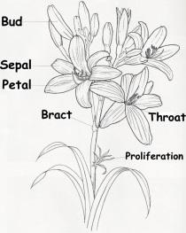 daylily-scape.jpg