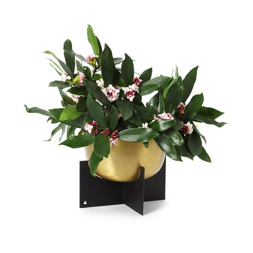 Marble Basics - Lune Gold Planter (Gold Bowl and Black Base - Flowers not included)