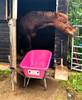 Big Mucker Pink Wheelbarrow - 100 Ltr / 120kg