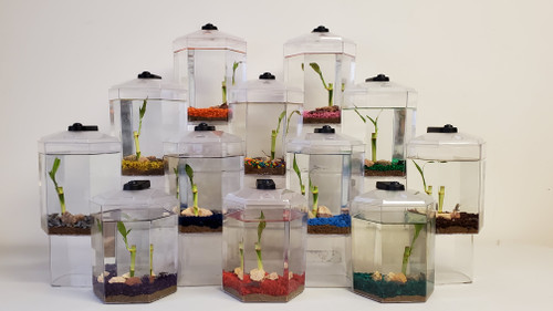 Froggy's Gallon-sized BioSpheres (WITH FROGS) (Case of 8)