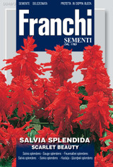Salvia splendens scarlet beauty