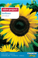 Sunflower 'Alto Giallo' Helianthus annuus