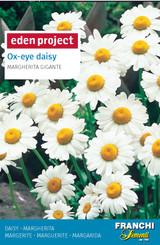 Margherita 'Giant Daisy' Leucanthemum vulgare