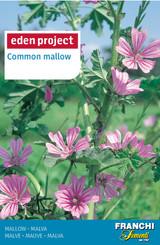 Tall Mallow 'Malva Sylvestris' - Malvia sylvestris